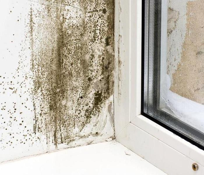 Mold Remediation Does Your Frankfort Home Have a Mold Problem?